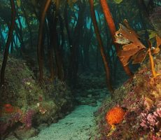 Stock Photo: Road in kelp forest
