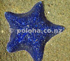 Stock Photo: Unusually bright blue cushion sea star Patiriella regularis