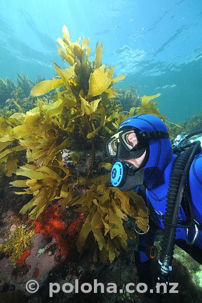 diver-with-kelp_600