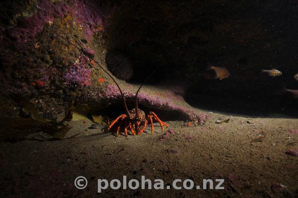 DAN8552_crayfish_darkness.jpg_600