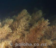 Seaweeds at night