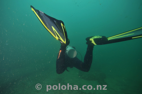 Aleksandr swimming away