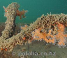 Dead coral tree