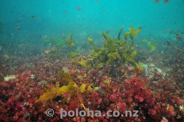 Colourful algae in turbid water