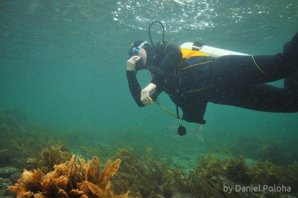 Diver equalizing
