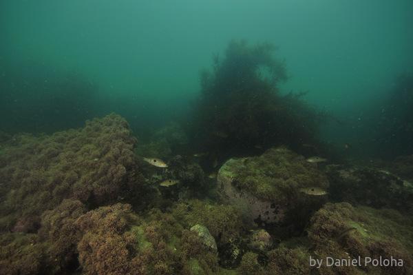 Spotties in murky water