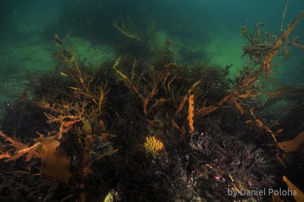 Sea weed jungle