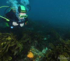 diver among seaweeds