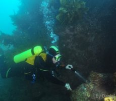 DAN_2686_diver_at_reef_wall.jpg_600